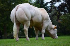 Bounty visto con le sue masse muscolari posteriori