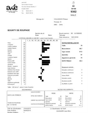 Il report morfologico di AWE di Bounty