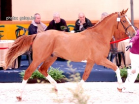 Emerald BWP Stallion Approval