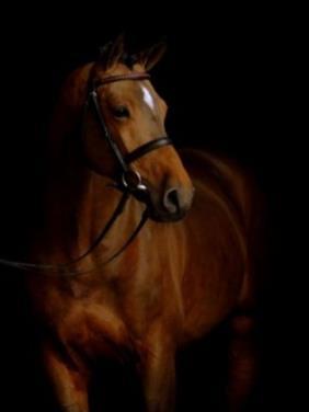 Horse_Canto-_3big
