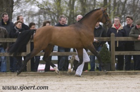 L'Esprit Stallion Presentation