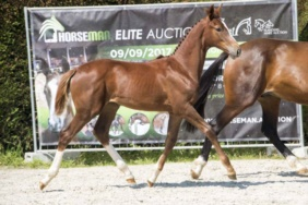 Red Rose EH (Kentucky x Darco) won Elite foals