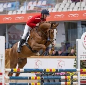Rio VD Zwartbleshoeve Approved stallion BWP