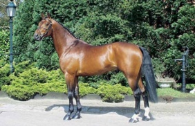 stallion-triomphe-03